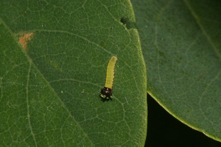 First Instar on 26 August 2011