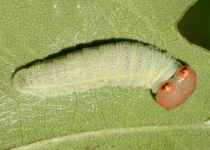 larva on September 29, 2008