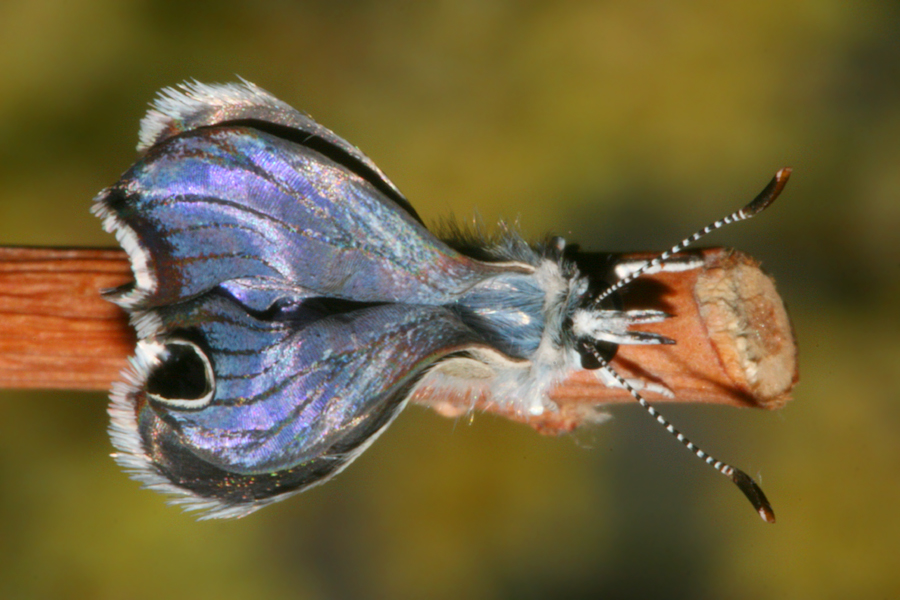 inflating wings