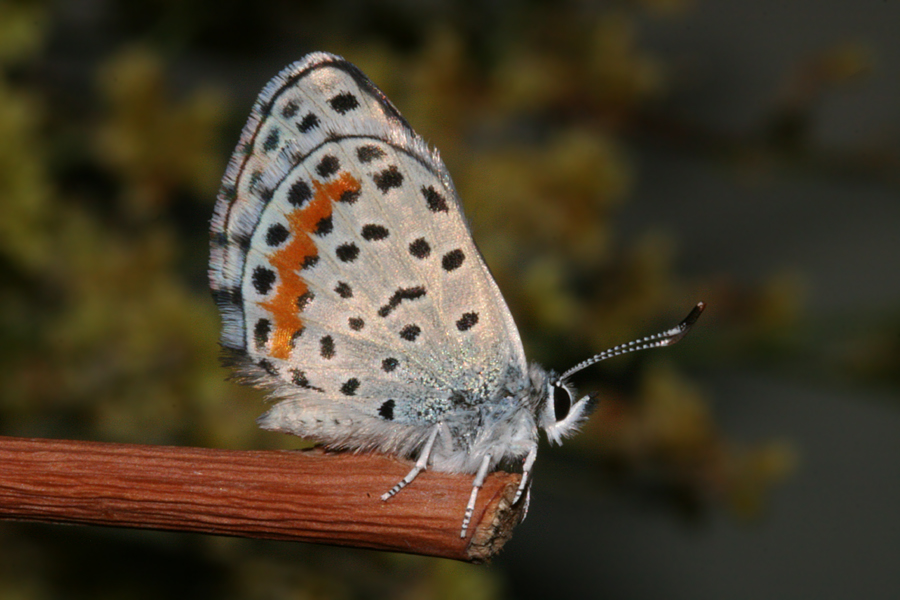 drying wings