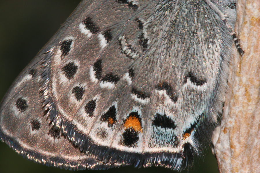 wing close-up