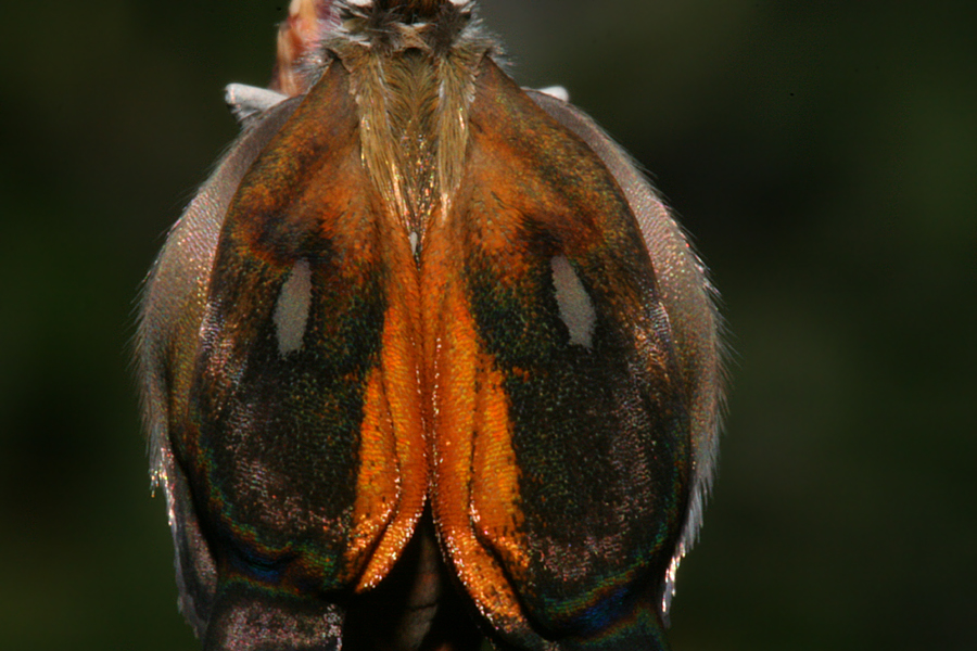 close-up of wings