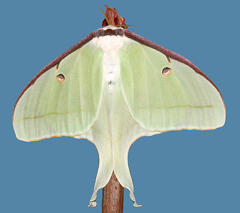dorsal view