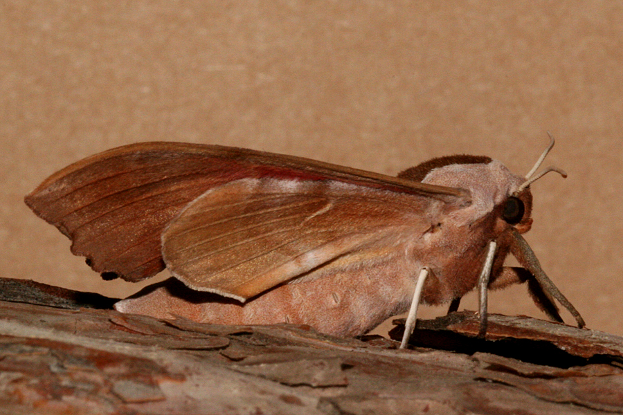 Female lateral view
