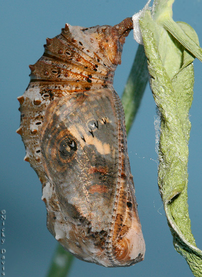 Photo shows butterfly