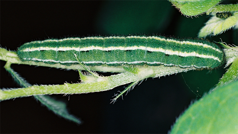 5th instar by Jack Harry