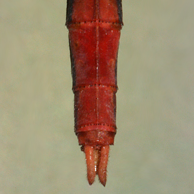dorsal view of