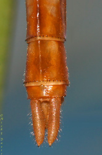 view of appendages