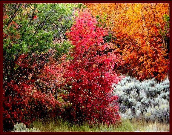 Fall Colors in South Fork of Provo Canyon, Utah County, Utah  ©NJDavis